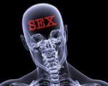 organ sexual